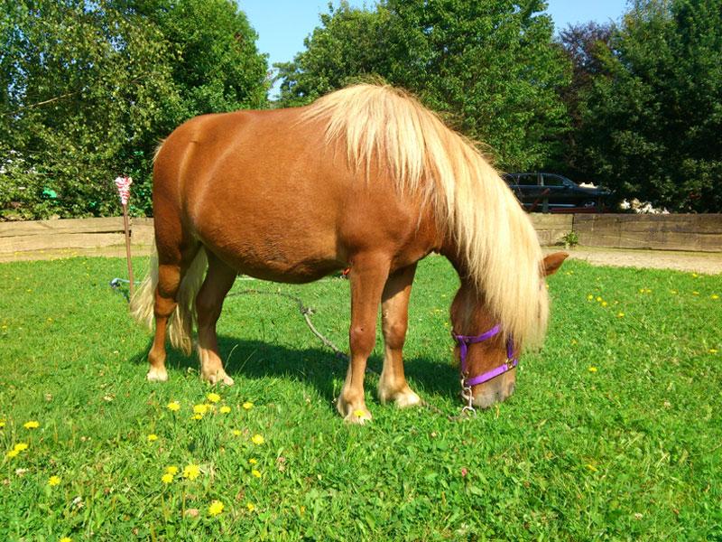 Unsere Lern- & Legasthenietrainings Pferde